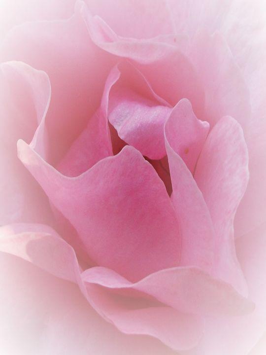 Pretty in Pink - Susie Hawkins