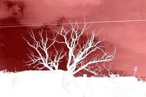 Tree red negative