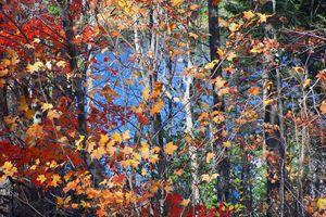 Autumn colours in Arrowhead Park