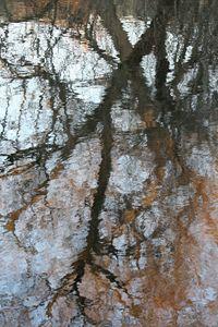Reflection in Huntsville River
