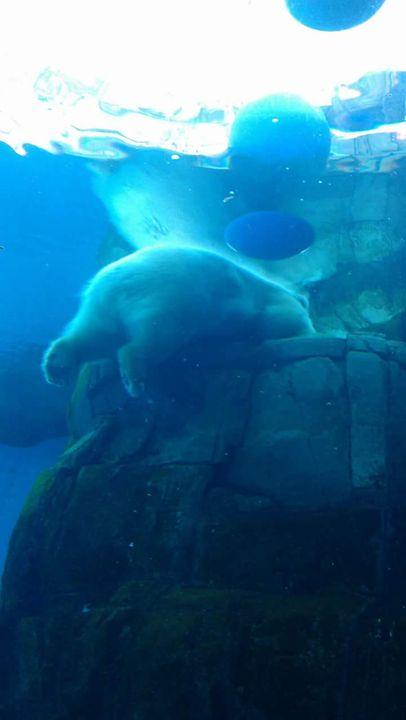 Polar bear - Nicole Woodson