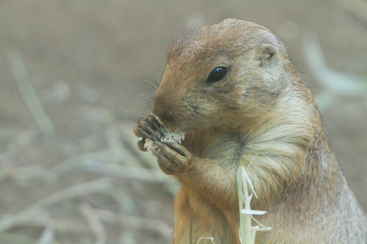 Groundhog - Kimberly Goddard