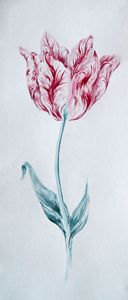 Viceroy Tulip Study 3 in watercolor - Jack Sides