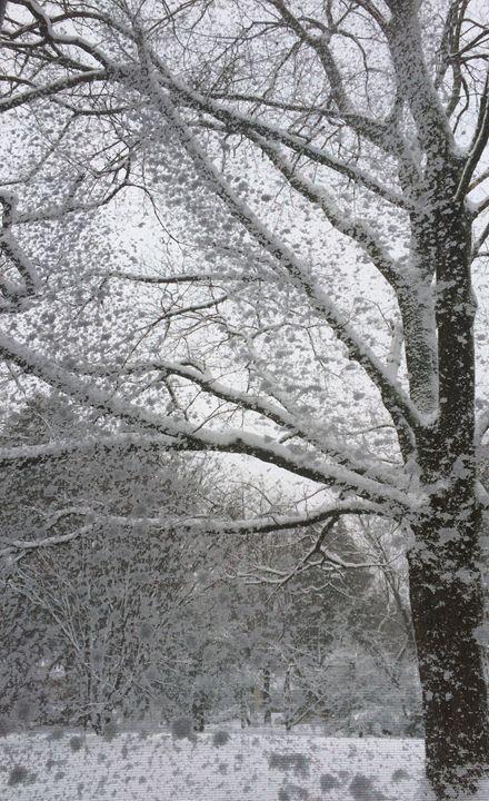 Winter wonderland - Cordero's Artwork