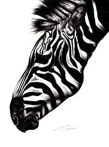 Zebra - Emma Louise Jones
