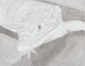 abronia graminea alligator lizard