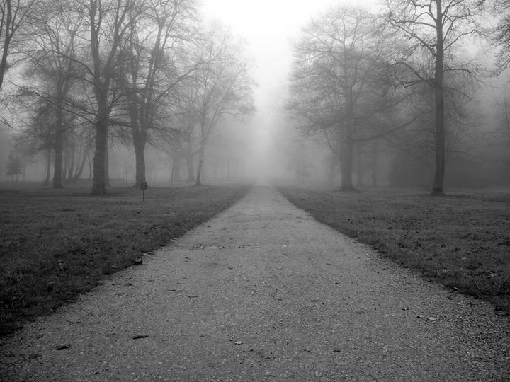 A Stroll in the Park - My Photos