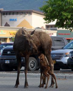 IMAX And Moose