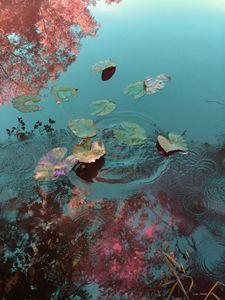 Lily Pad Ripples Agua