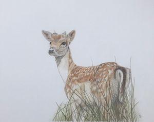 English fallow deer