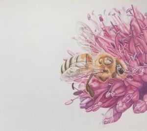 Honey bee - Tracey Bryant