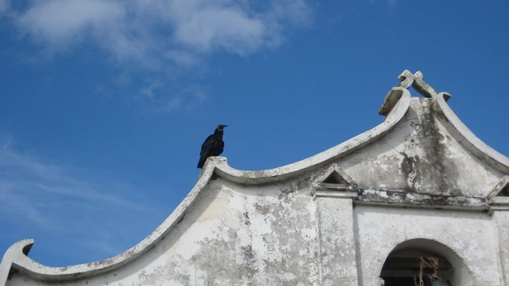 Vulture Patience - SaHa