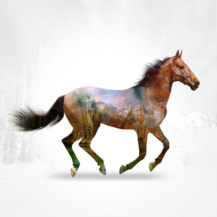 The Horse - RON ASHKENAZI ART