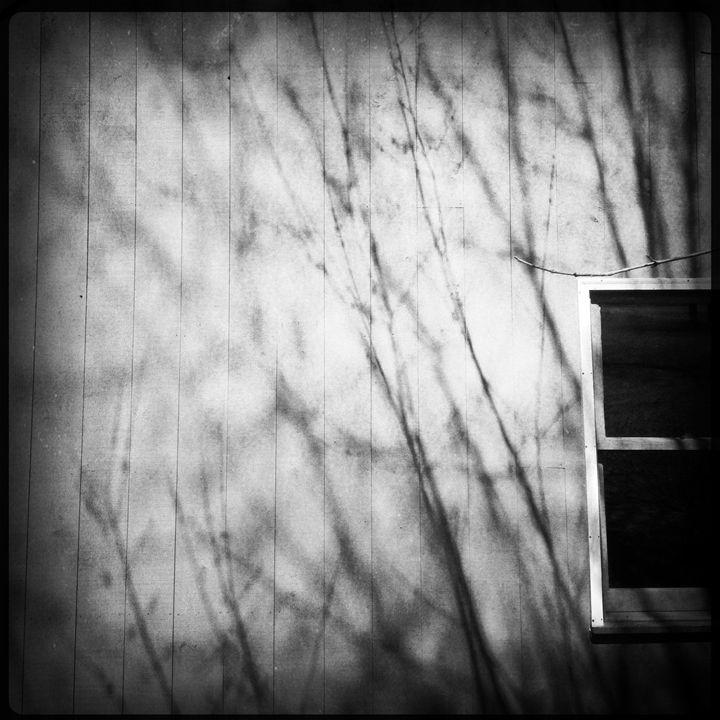 Pattern - Peter Carini