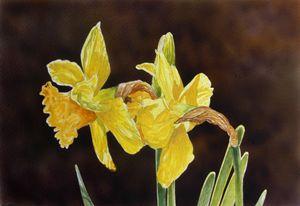 """""""Yellow Daffodils"""""""