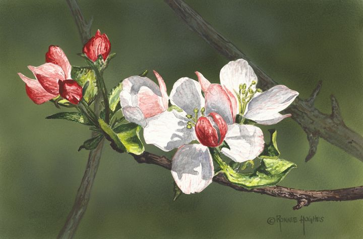 """Apple Blossoms"" - Hughes Twins Art"