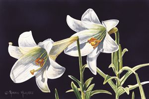 """""""Easter Lilies"""""""