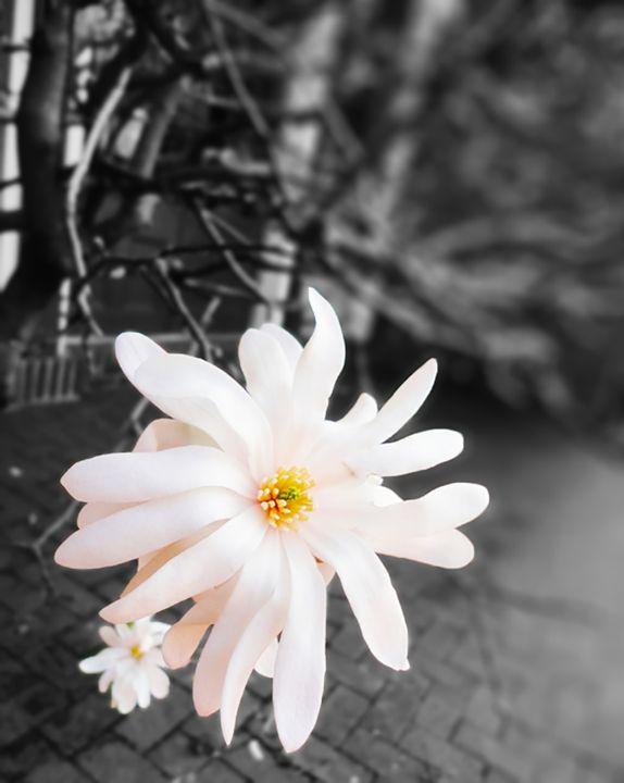 Bloom in Bleak - Pastel Palette