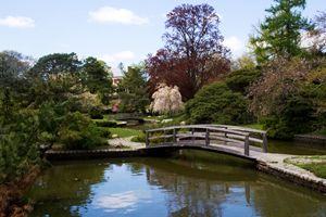 Japanese Garden with sky view - Everyday Fun Photography