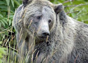 Beautiful bear.