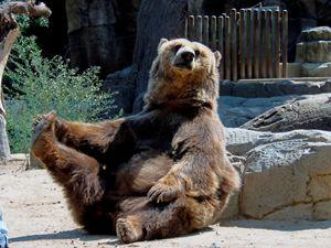 Playful Brown Bear.