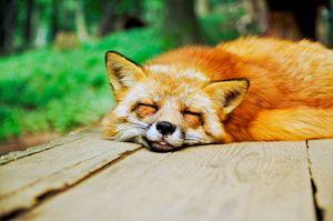 Quick snooze.