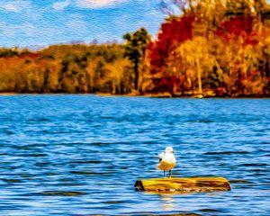 Gull on a Log - MJB DigiArt