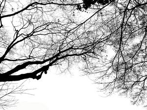 Branches looking up