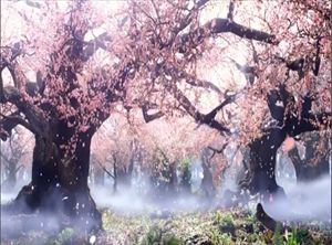 Aptc3 - Cherry Blossom