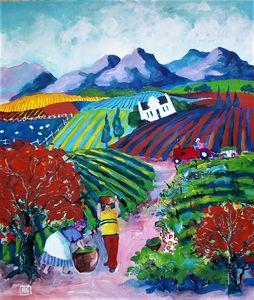 gathering grape harvest in winelands