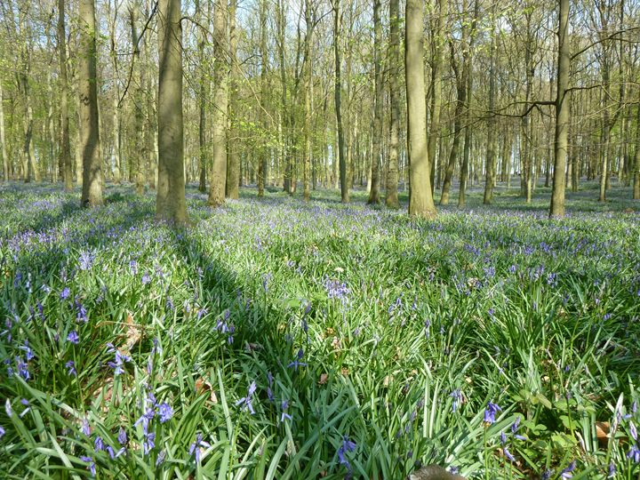 Ashridge Estate Dockey Woods 2 - A Beautiful World
