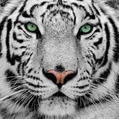 Tiger's Art Shop