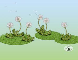 The Dandelion Puffs
