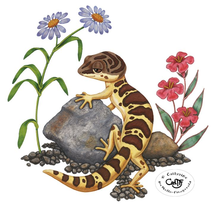 The Lazy Gecko - white background - Illustration by Cat