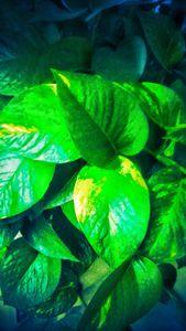 Green effect