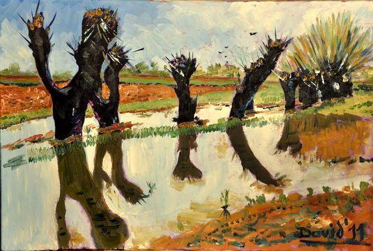 WILLOWS - davidschab gallery
