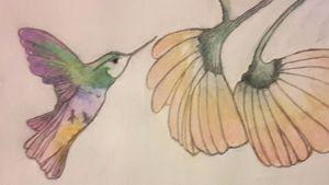 Hummingbird - Flowers