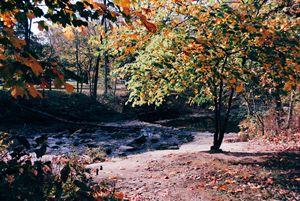 Autumn Colors4.