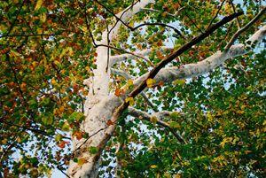 Autumn Colors2.