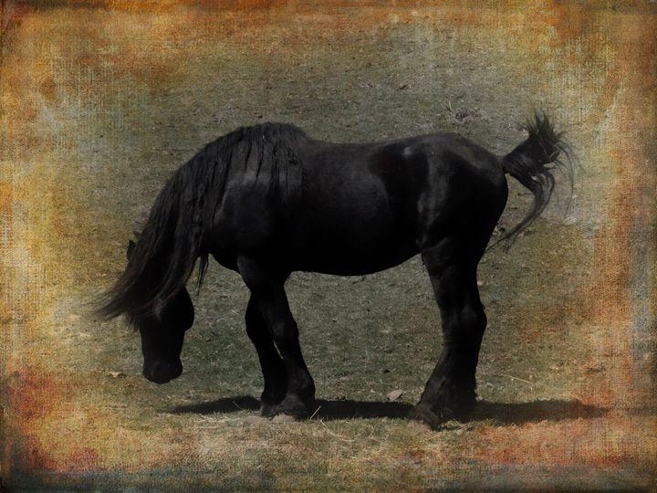 Black Stallion - Pine Singer Photographic Art