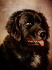 Canine Attachment-Newfoundland - Pine Singer Photographic Art