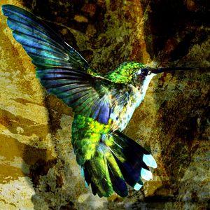 SALE - the hummingbird