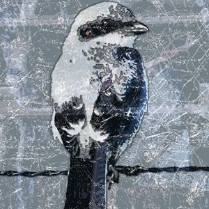 SALE - bird on barbed wire