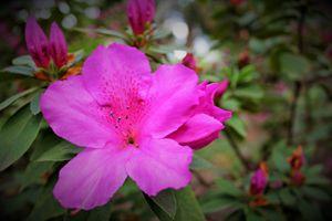 Pink Flower Houston Zoo