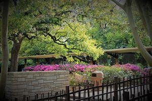 Houston Zoo II