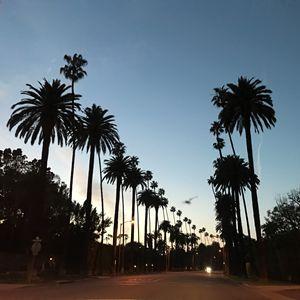 Beverly Hills Palms