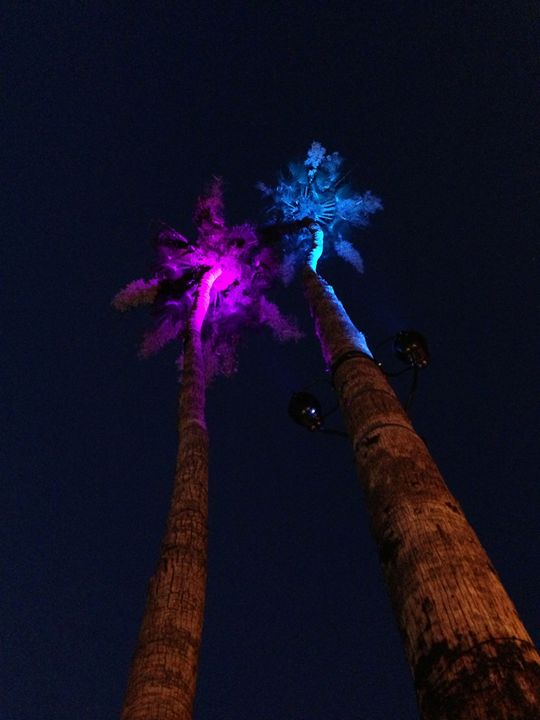 Palm Trees - Purple & Blue - Tim Thompson