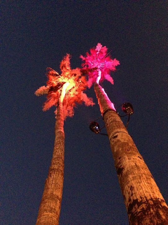 Palm Trees Orange & Pink - Tim Thompson