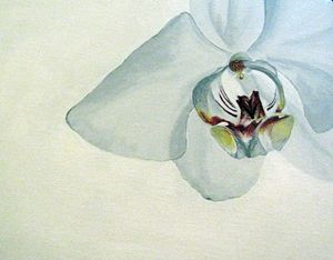 Orchid #4 of 4