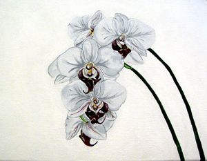 Orchids #2 of 4